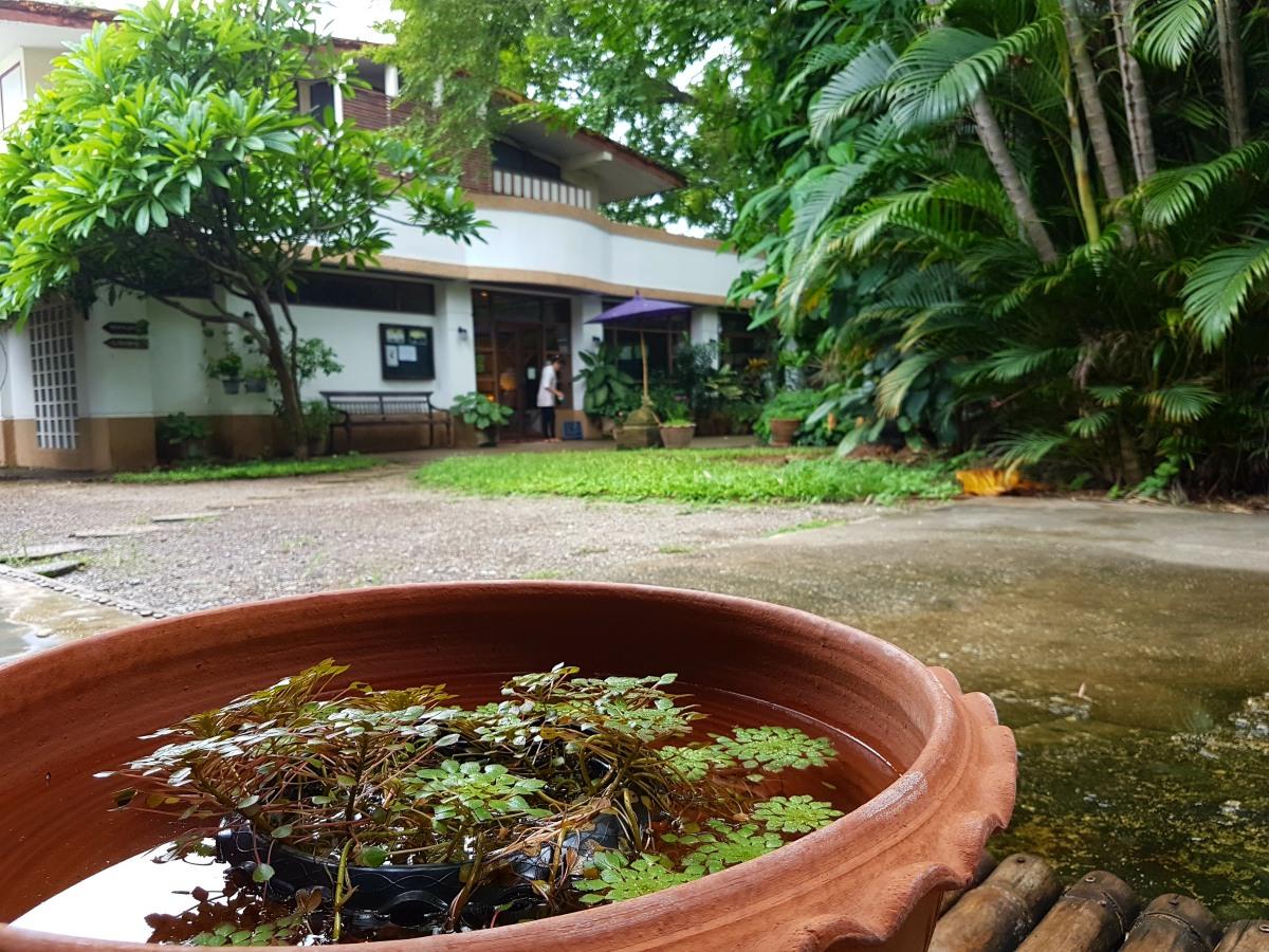 Yoga Holiday, Chiang Mai